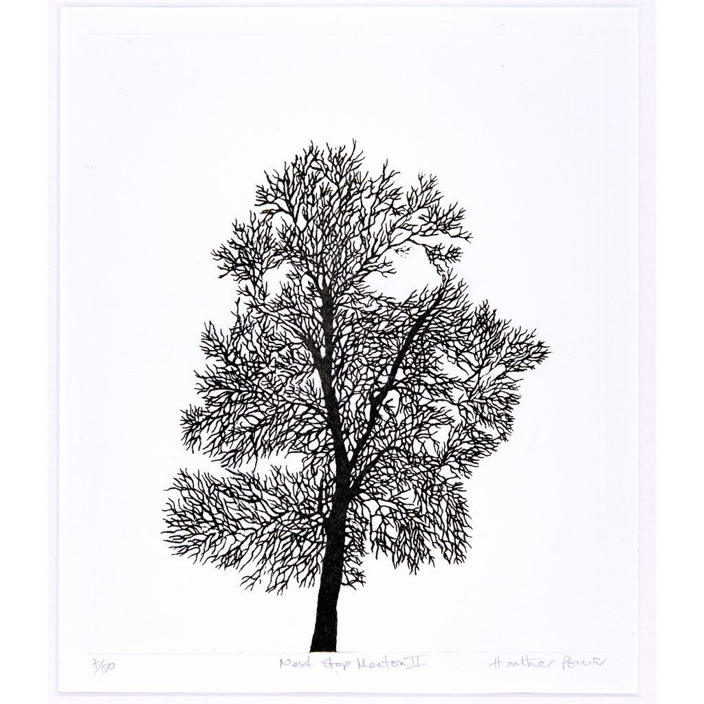 trees-med-1